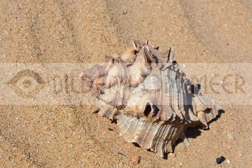 Bilder vom Meer | Muschel Bilder Sandstrand
