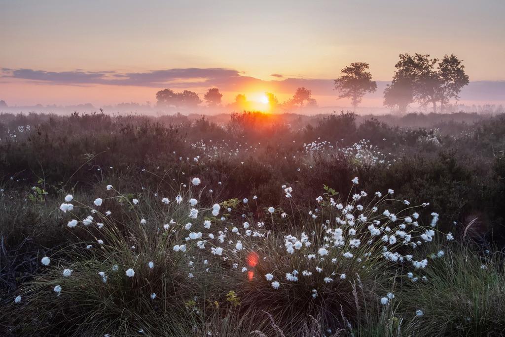 Wo das Wollgras leuchtet, Recker Moor   Die Serie 'Deutschlands Landschaften' zeigt die schönsten und wildesten deutschen Landschaften.