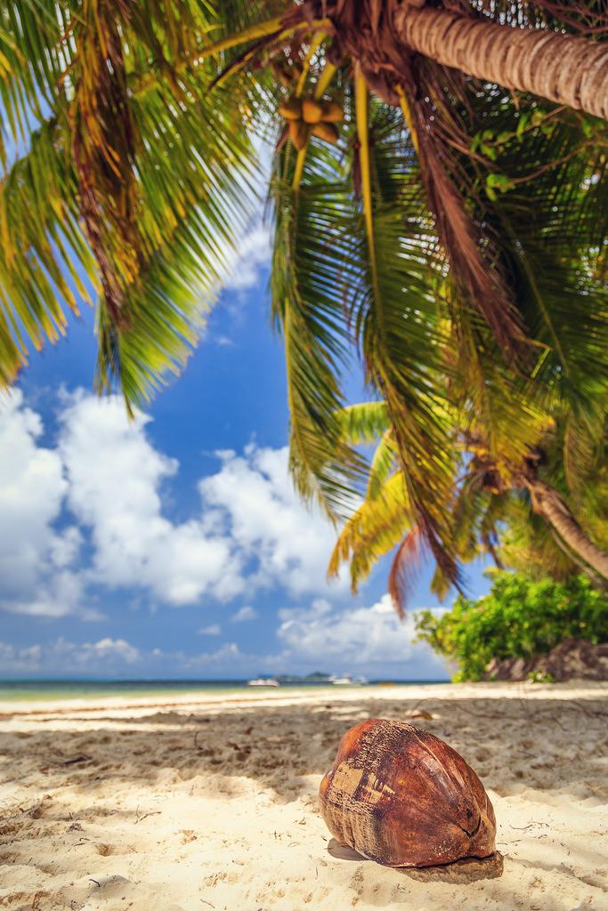 134-Seychellen-Praslin-2