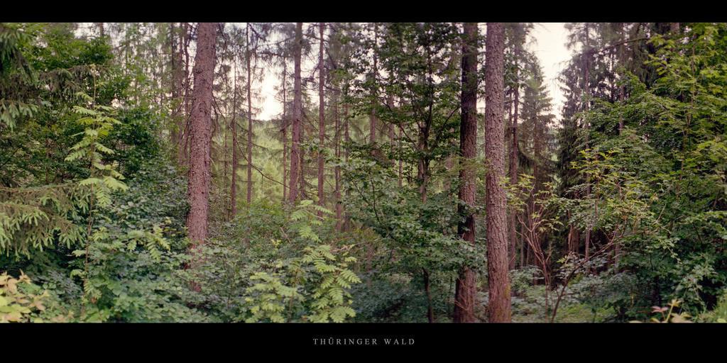 Thüringer Wald | Mischwald im Thüringer Wald