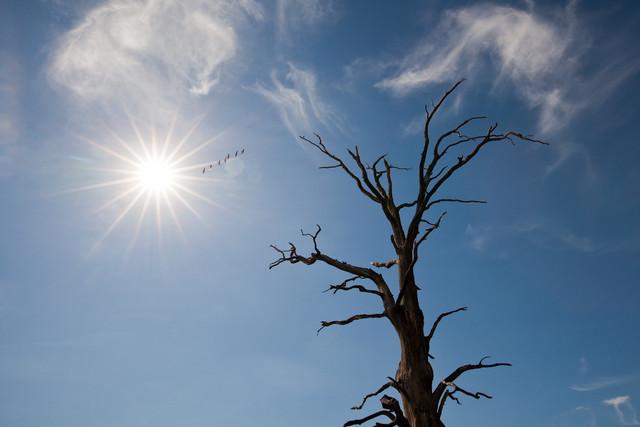Sieben Wildgänse fliegen zur Sonne | Spaziergang am Quitzdorfer Stausee, Blick in den blauen Himmel, wo 7 Wildgänse in Richtung Sonne ziehen, im Vordergrund ein toter Baum