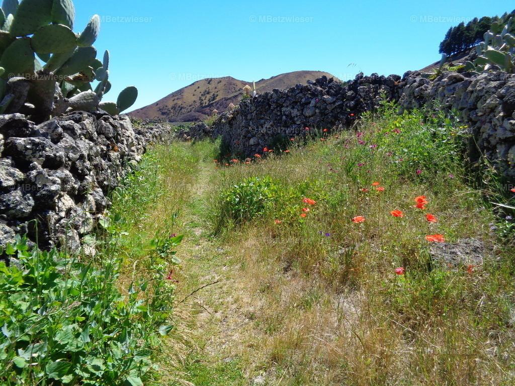 DSC01281 | La Albarrada - Das verlassene Dorf auf der Hochebene
