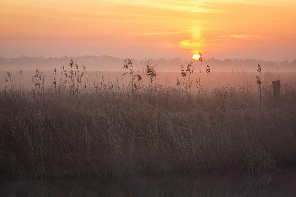 Sonnenaufgang an der Hamme   Winterlicher Sonnenaufgang an der Hamme bei Vollersode.