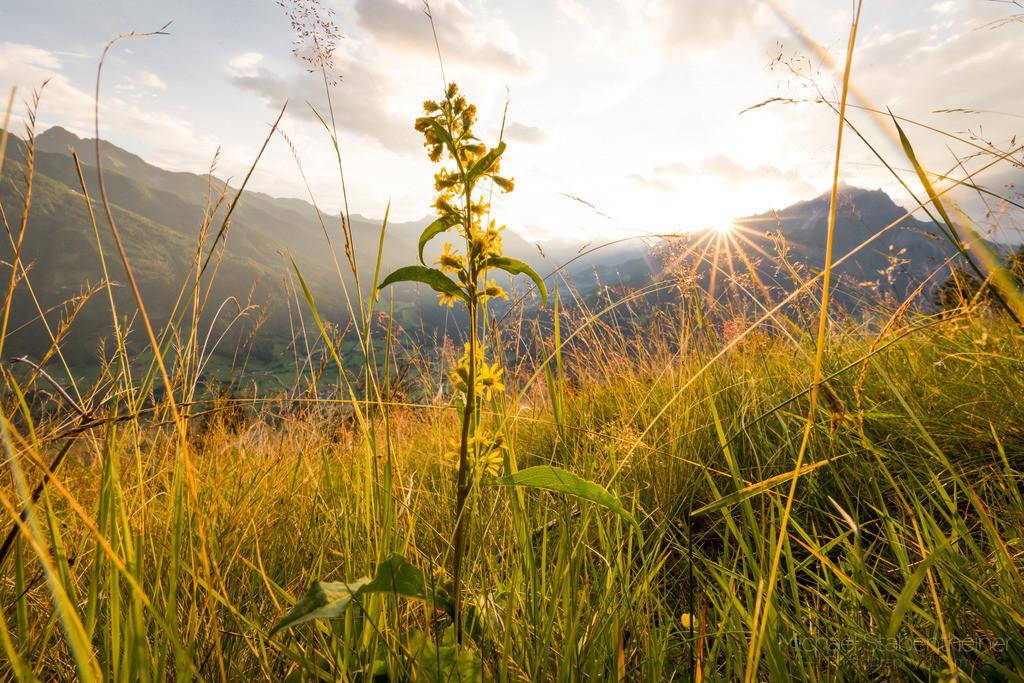 Almwiese | Blumen auf einer Almwiese