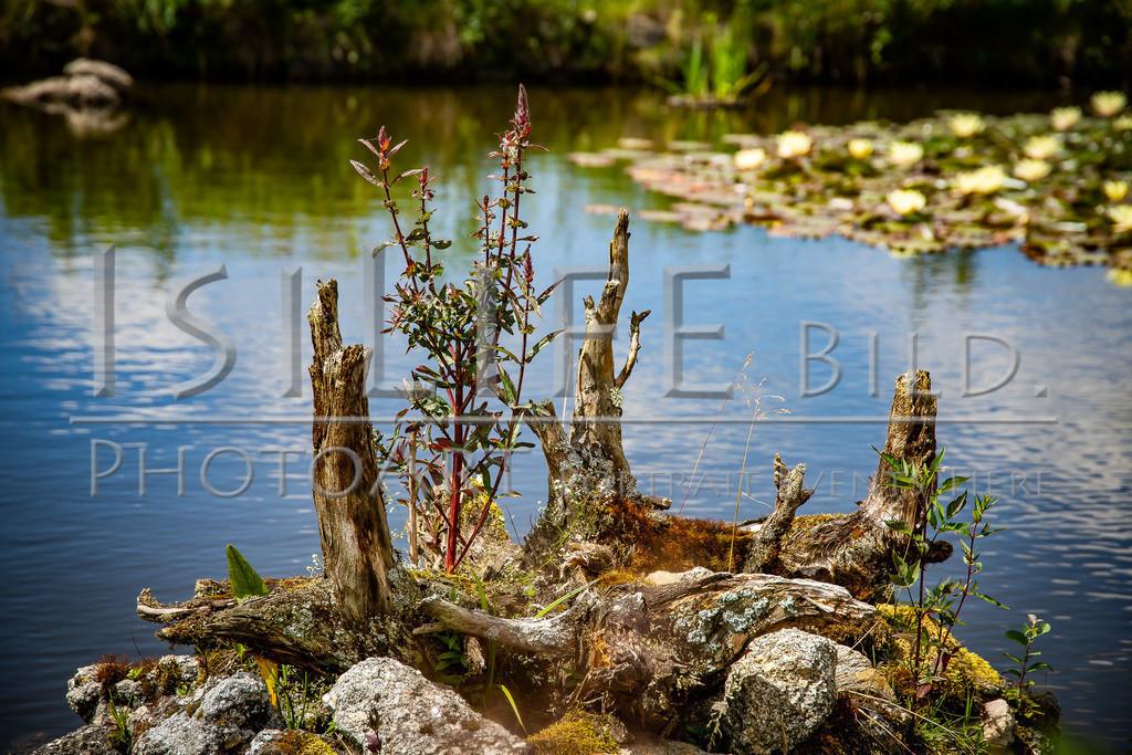 Naturschutzgebiet Doost | Überraschender Seerosenteich