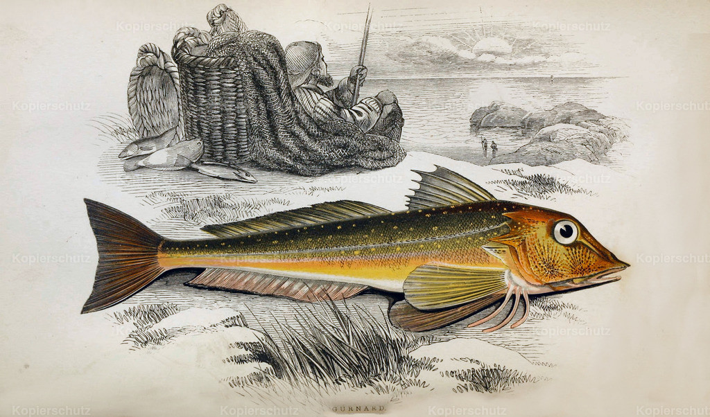A-History-of-the -Fishes- of- the- British-Islands-Fische-1862-1866 (25)