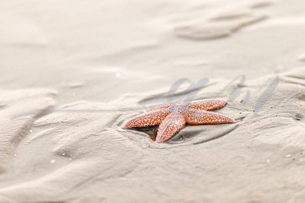 Seestern am Strand