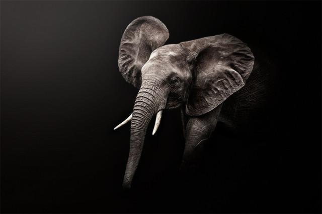 LITTLE ELEPHANT fineArt   Kenya