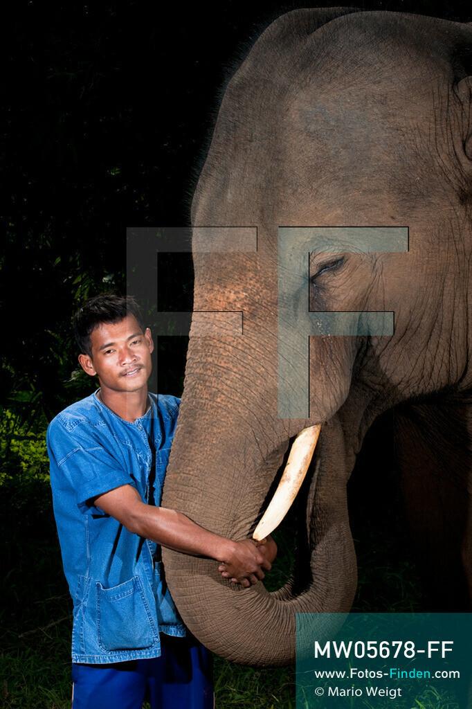 MW05678-FF   Thailand   Goldenes Dreieck   Reportage: Mahut und Elefant - Ein Bündnis fürs Leben   Mahut Khan und sein Asiatischer Elefant Pepsi  ** Feindaten bitte anfragen bei Mario Weigt Photography, info@asia-stories.com **