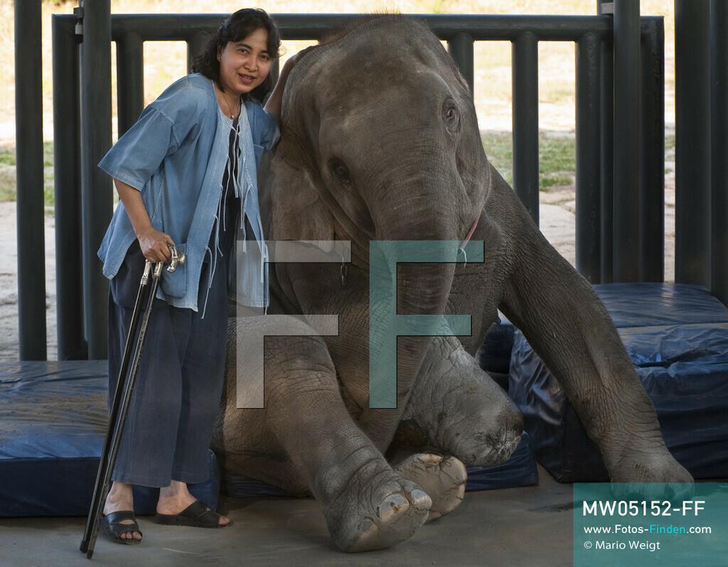 MW05152-FF | Thailand | Lampang | Reportage: Krankenhaus für Elefanten | Gründerin der Elefantenklinik Soraida Salwala mit den beinamputierten Elefant Mosha  ** Feindaten bitte anfragen bei Mario Weigt Photography, info@asia-stories.com **
