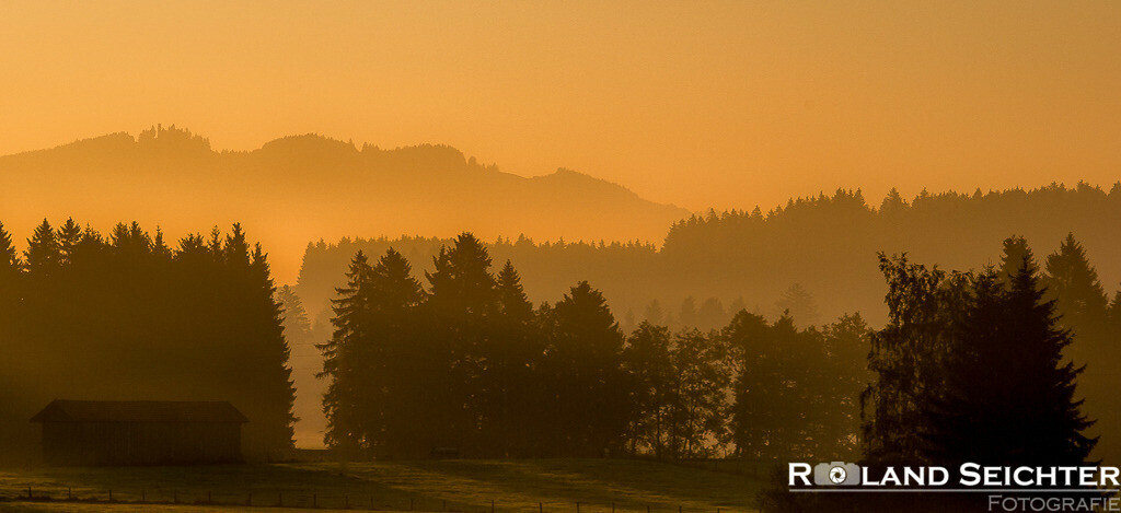 Im Morgennebel/In the morning mist