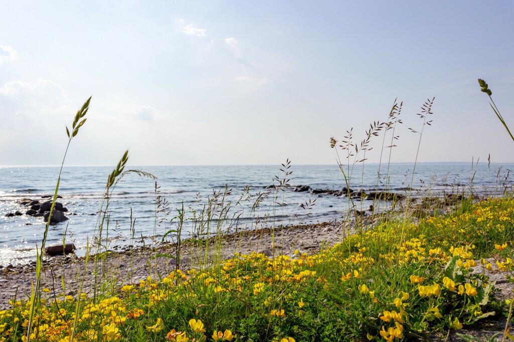 Strand in Damp | Gelbe Blumen am Strand in Damp