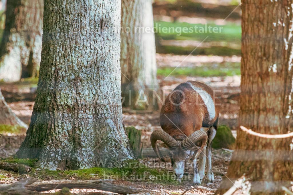 Wildpark-Kaiserslautern_20210918_0854