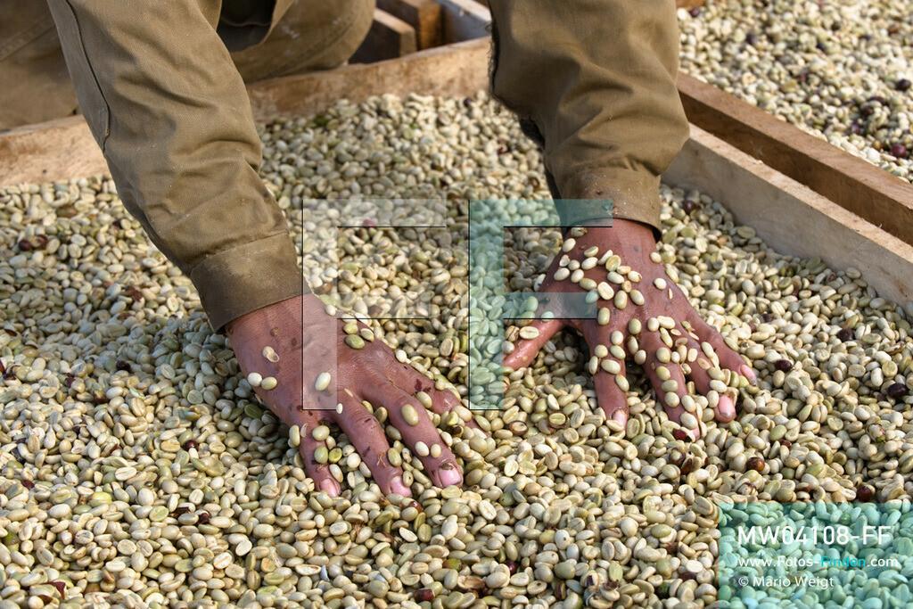 MW04108-FF   Laos   Paksong   Reportage: Kaffeeproduktion in Laos   Die gewaschenen Kaffeebohnen werden in der Sonne getrocknet. In den Plantagen auf dem Bolaven-Plateau gedeihen Sträucher der Kaffeesorten Robusta und Arabica.  ** Feindaten bitte anfragen bei Mario Weigt Photography, info@asia-stories.com **