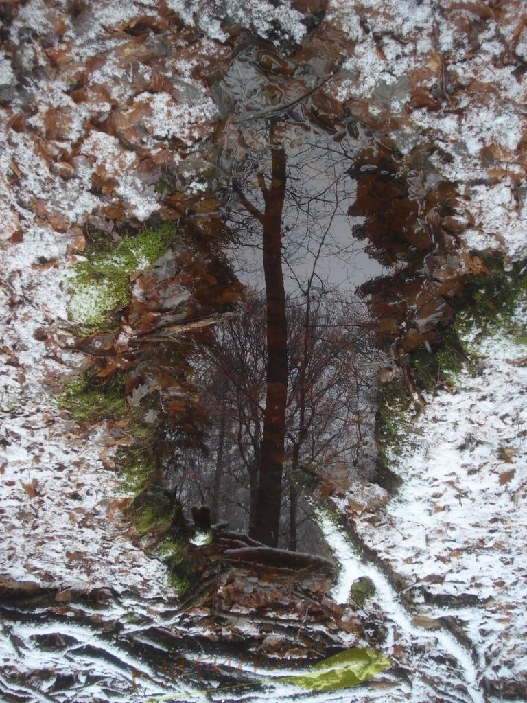 Blick nach Innen | Blicke tief hinein - finde Dich selbst - ein winterlicher Baum, klar gespiegelt - das sind wir, wenn wir nur als Mensch - ohne Statussymbole, Markenkleidung oder Berufsposition da stehen: entblättert, aber wunderschön in unsere ganz eigenen Form - und eingerahmt von Winterschönheit.