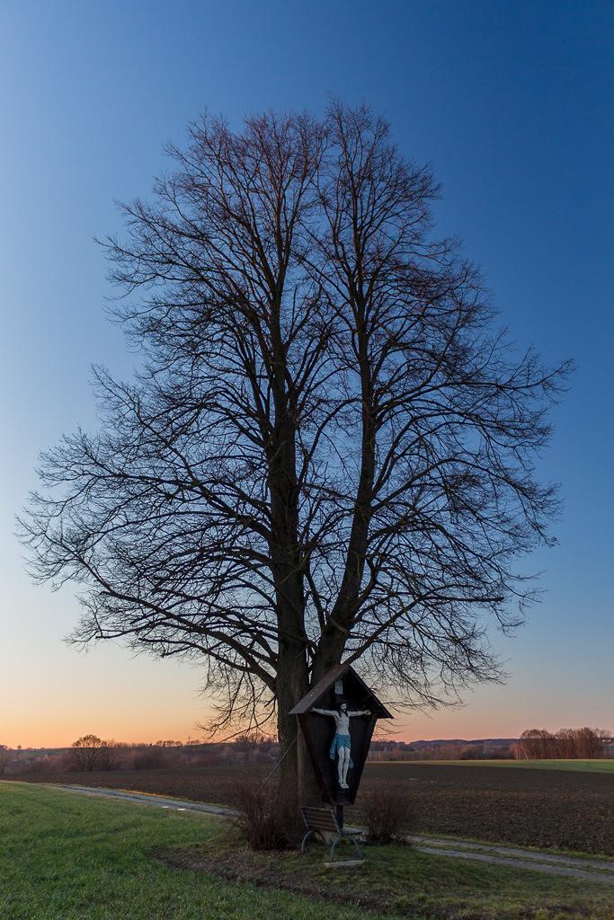 Baum mit Jesuskreuz