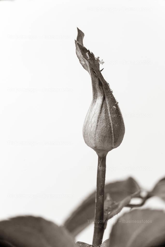 20200413_Frühlingsblüten_0048