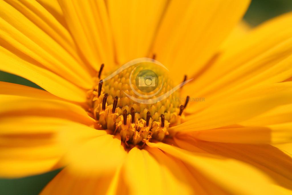 Gartenblume(14)