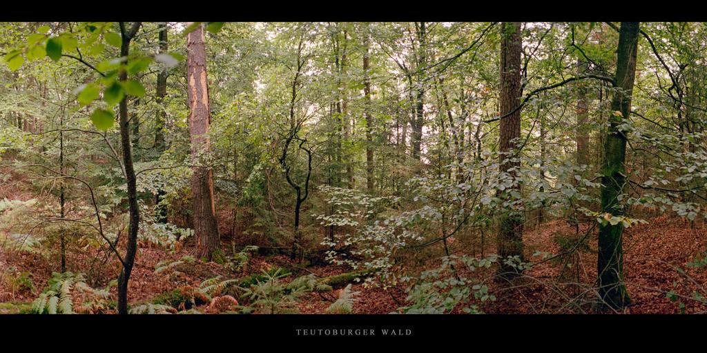Teutoburger Wald | Mischwald mit Buchen und Fichten im Teutoburger Wald