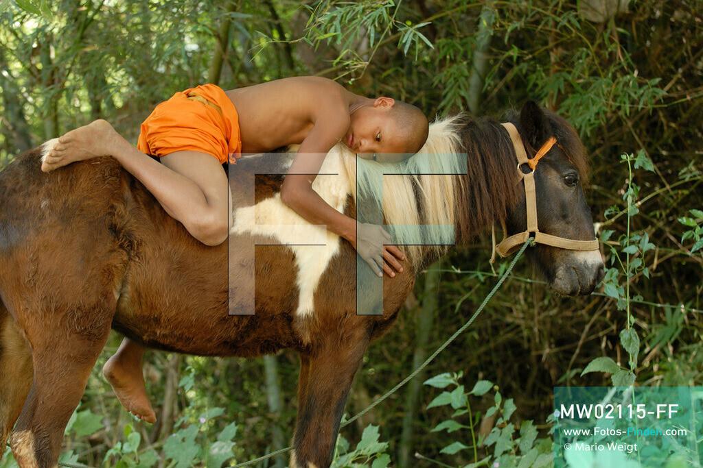 MW02115-FF   Thailand   Goldenes Dreieck   Reportage: Buddhas Ranch im Dschungel   Der junge Mönch Aa-Lu auf seinem Pferd Dee Dee   ** Feindaten bitte anfragen bei Mario Weigt Photography, info@asia-stories.com **