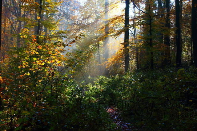 Waldweg am Morgen | Waldweg am Morgen im Herbst, Rundwanderweg 1
