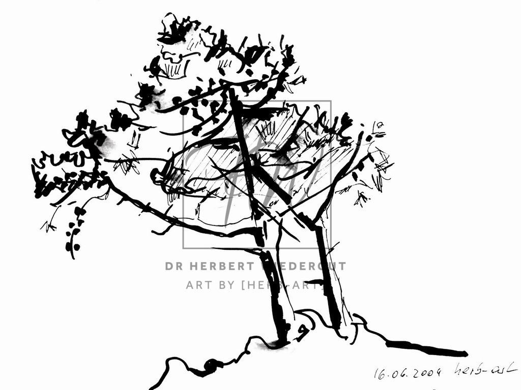 Pinie in der Toskan | Reiseskizze mit Tusche auf Zeichenblock von Dr. Herbert Wiedergut