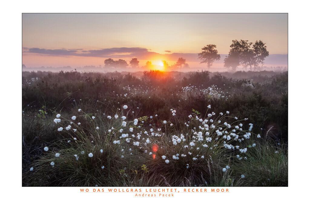 Wo das Wollgras leuchtet, Recker Moor | Die Serie 'Deutschlands Landschaften' zeigt die schönsten und wildesten deutschen Landschaften.