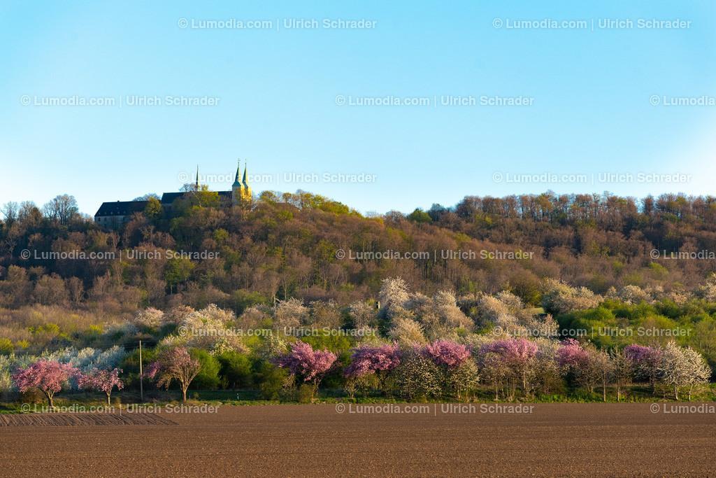 10049-10742 - Blütenpracht bei Dingelstedt | max. Auflösung 8256 x 5504