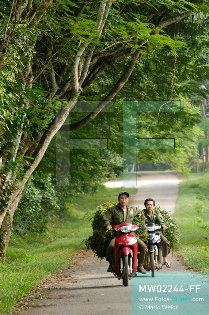 MW02244-FF   Vietnam   Provinz Ninh Binh   Reportage: Endangered Primate Rescue Center   Tierpfleger bringen zweimal täglich mit dem Motorrad spezielle Blätter für die Affen. Der Deutsche Tilo Nadler leitet das Rettungszentrum für gefährdete Primaten im Cuc-Phuong-Nationalpark.   ** Feindaten bitte anfragen bei Mario Weigt Photography, info@asia-stories.com **