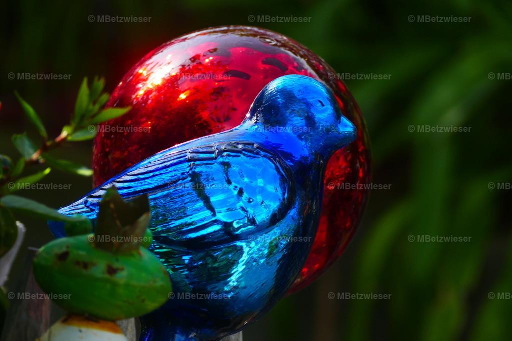 P1020176 | Farbtupfer in Blau und Rot