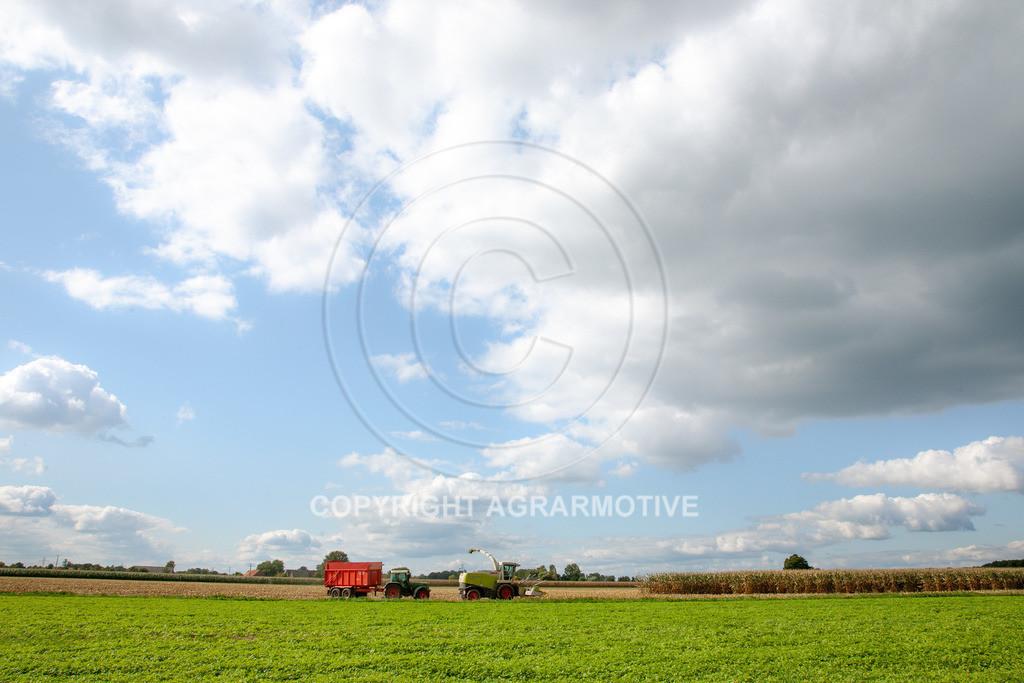 20080914-IMG_9142 | Silomais wird gehäckselt - AGRARFOTO Bilder aus der Landwirtschaft