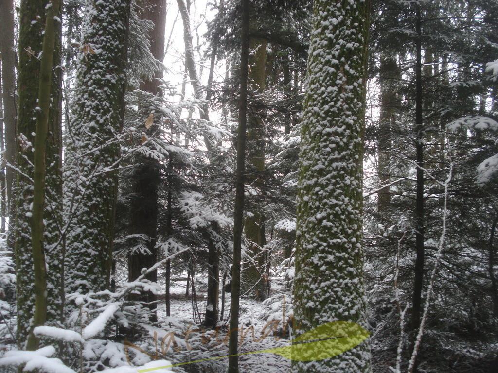 Tupfenbaum | Die Schneetupfen auf den Rinden laden Dich ein zur leisen Fröhlichkeit!