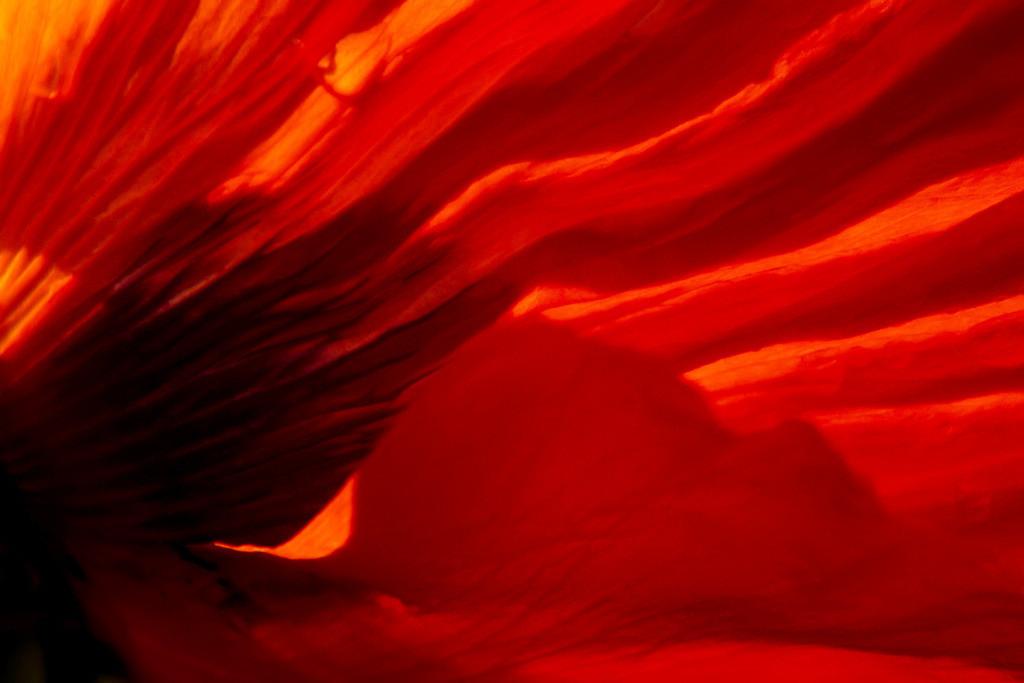Best. Nr. feuer04 | Abstraktes Makroportrait einer roten Mohnblüte | Das Element Feuer steht für den Sommer, seine Himmelsrichtung ist der Süden, seine Farben sind kräftige Rot-, Orange- und Purpurtöne. Spitze und dreieckige Formen repräsentieren es am besten. Es steht einerseits mit Lernen, Aktivität und Gestaltung/Design in Verbindung und kann gut überall eingesetzt werden, wo intellektuell gearbeitet wird, also z.B. auch in Büros und im Homeoffice. Andererseits repräsentiert es Herzenswärme, Liebe und Lebensfreude und kann auch im Wohnzimmer eingesetzt werden.