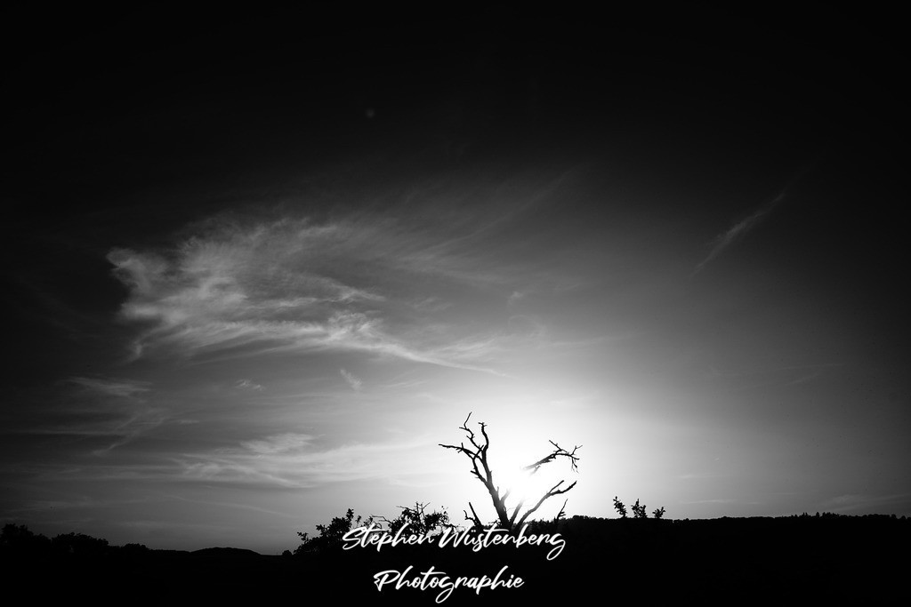 Knorriger Baum im Sonnenuntergang | SW-Hochkontrastaufnahme eines knorrigen Baumes im Sonnenuntergang