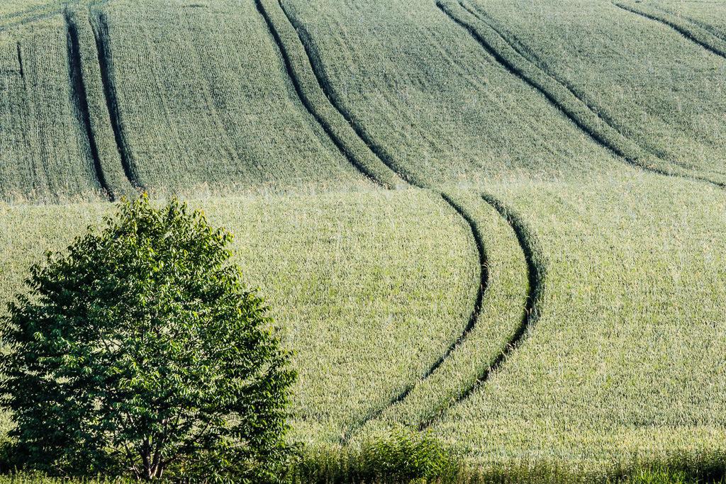 Traktorspuren im Feld