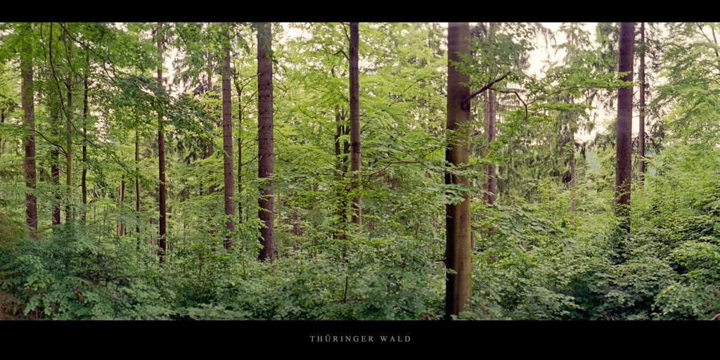 Thüringer Wald   Mischwald im Thüringer Wald