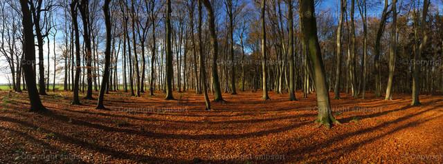 Herbst im Wald | Panoramaaufnahme vom Wald im Oktober mit einem Laubteppich.