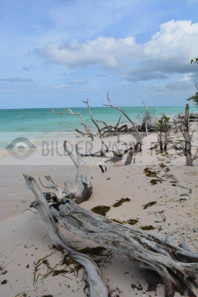 Einsamer unberührter Strand in Kuba | Bilder vom Meer: Cayo Jutías