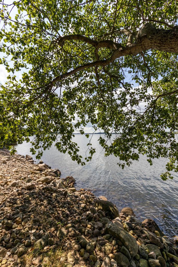 Baum an der Schlei | Schleiufer im Sommer