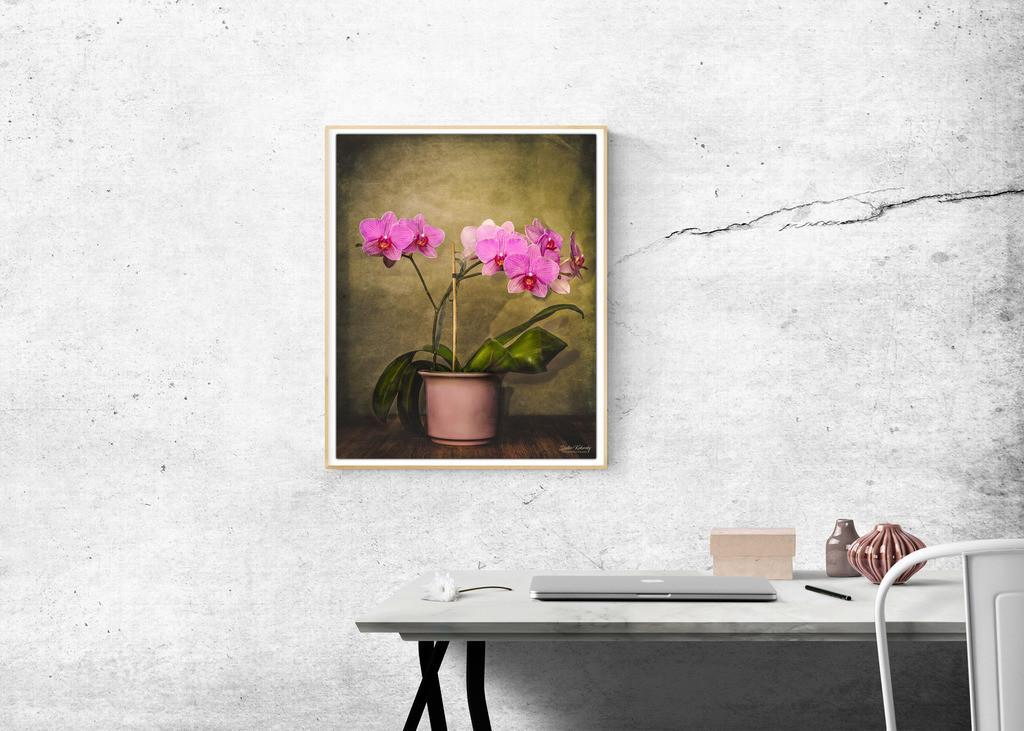orchideen-wall-205321