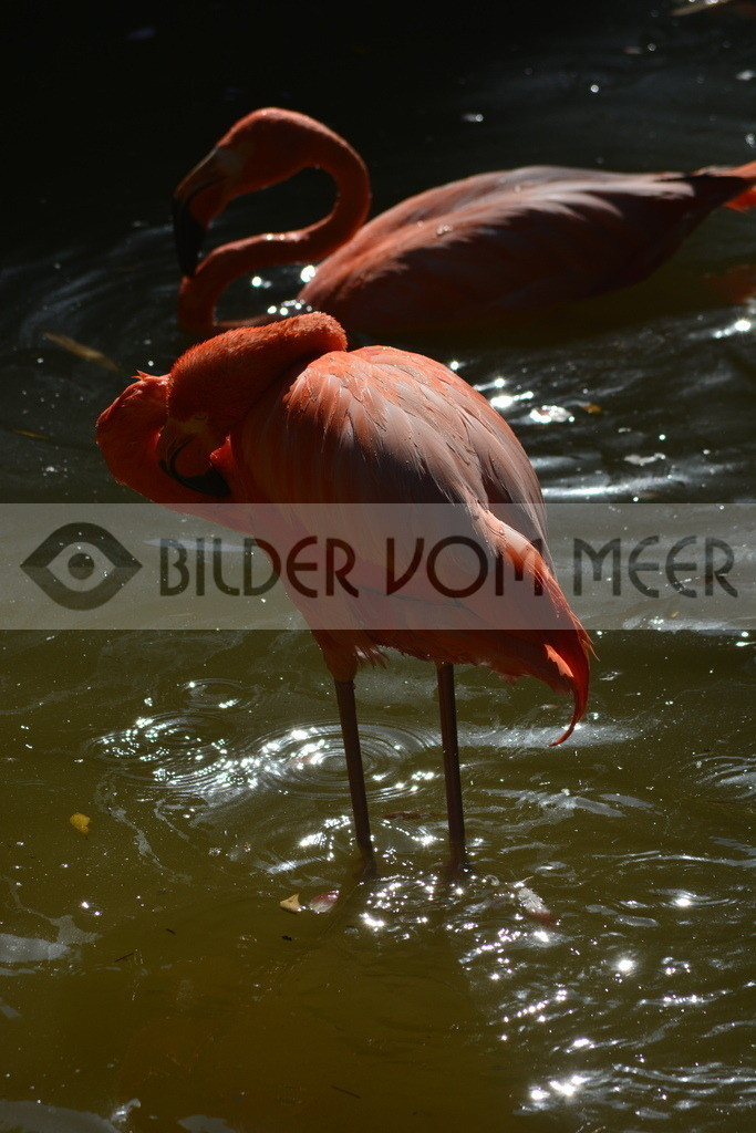 Flamingo Art Bilder | Roteer Flamingo Art Bilder