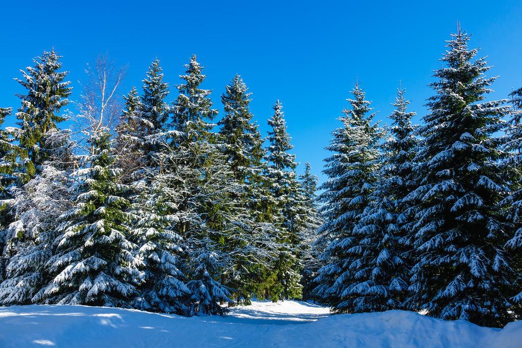 rk_04490 | Winter im Riesengebirge bei Benecko, Tschechien.