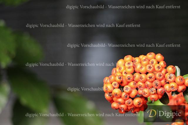 Strauch (1)-Vorschaubild