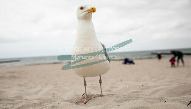 Tiere, Möwe im Sand