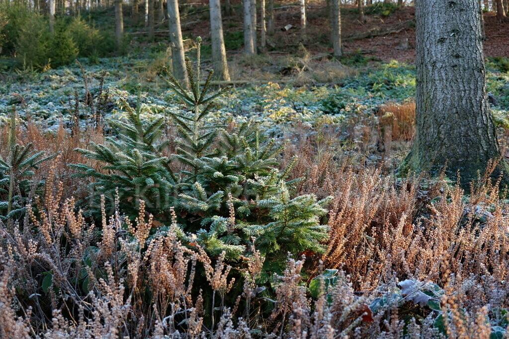 Frostiger Wald | Frostige Impression vom Wald in Iserlohn.