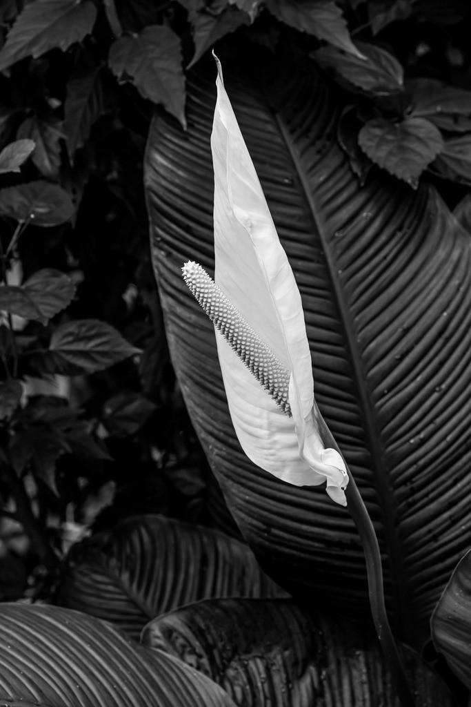 Spannung  | Jede Blüte hat ihren Duft.