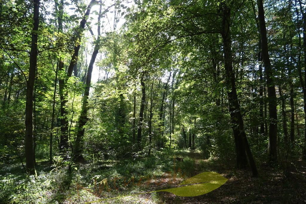 Sommerwald | Rein in den Wald - wohlfühlen!