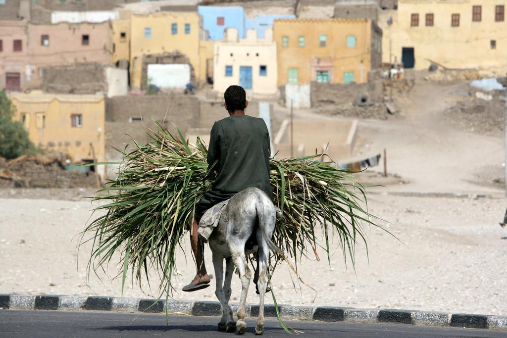 Dorfleben | Ägypten, Das Dorf Qurna, beim Tal der Koenige.