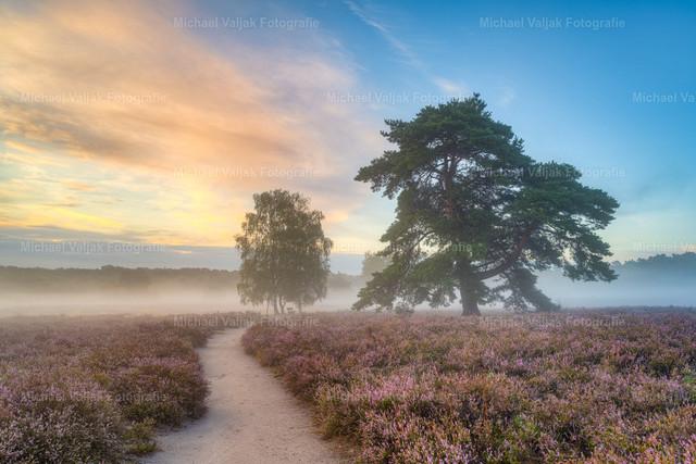 Morgennebel in der Westruper Heide   Ein früher Sommermorgen in der blühenden Heidelandschaft bei Haltern am See im Münsterland. Nebel liegt in der Luft und der Sonnenaufgang färbt die Wolken orange.