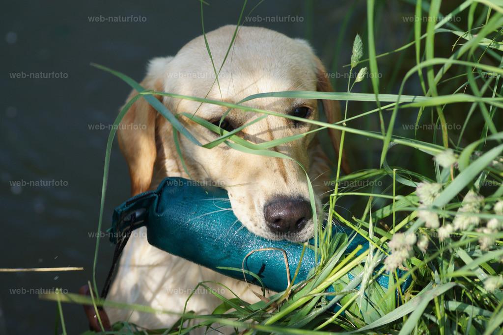 Hundeausbildung | Wasserarbeit